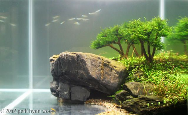 28 best images about aquascape on pinterest aquarium for Aquarium waterfall decoration