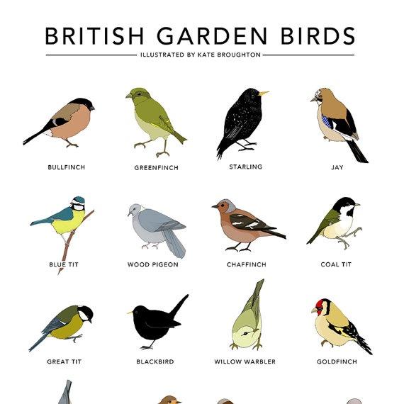 Garden bird print - 'British Garden Birds' poster ...