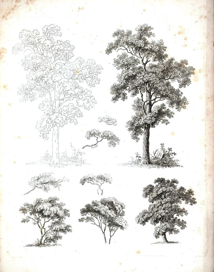 Botanical - Black and White - Tree sketches 5