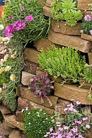 Stone wall planted with succulent plants
