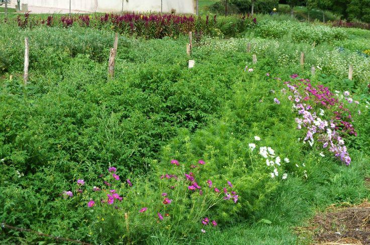 Les 473 meilleures images propos de jardin astuces sur for Plante kefir
