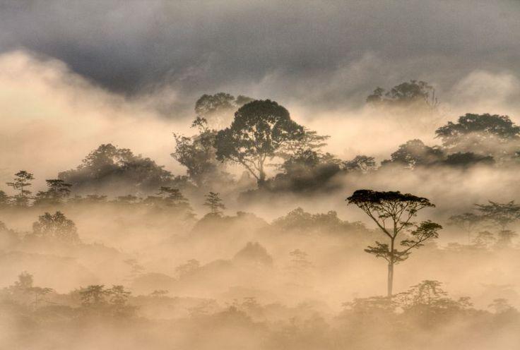 Malaysia: Gunung Mulu National Park