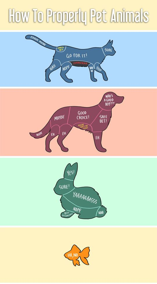 How To Properly Pet Animals.. . that last one. . omg. . i'm dying.