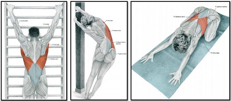 упражнения на растяжку спины