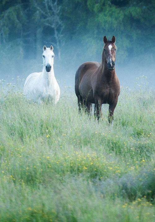 "Horses - titled ""You & Me! "" - by dranilj1"