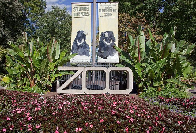 Learn about Washington DC's National Zoo, see more than 400 different species of animals, find hours, visiting tips, pictures and more.