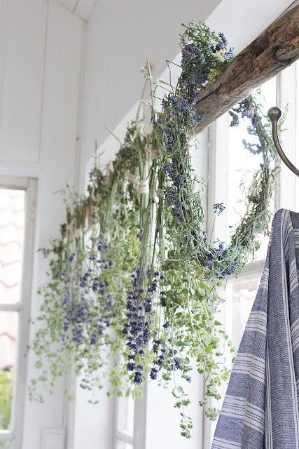 Amazing  besten Garten Lavendel Bilder auf Pinterest Lavendel Garten und Blumen