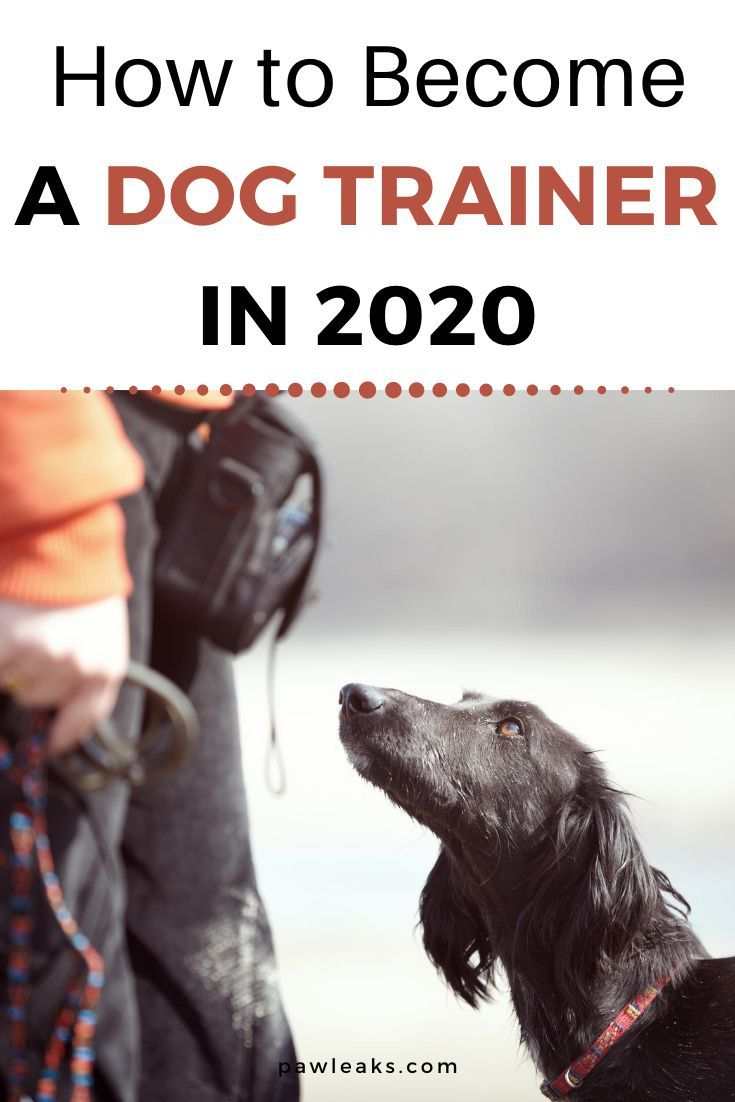 3 Steps To Become A Dog Trainer In 2020 In 2020 Become A Dog Trainer Dog Trainer Dog Training School