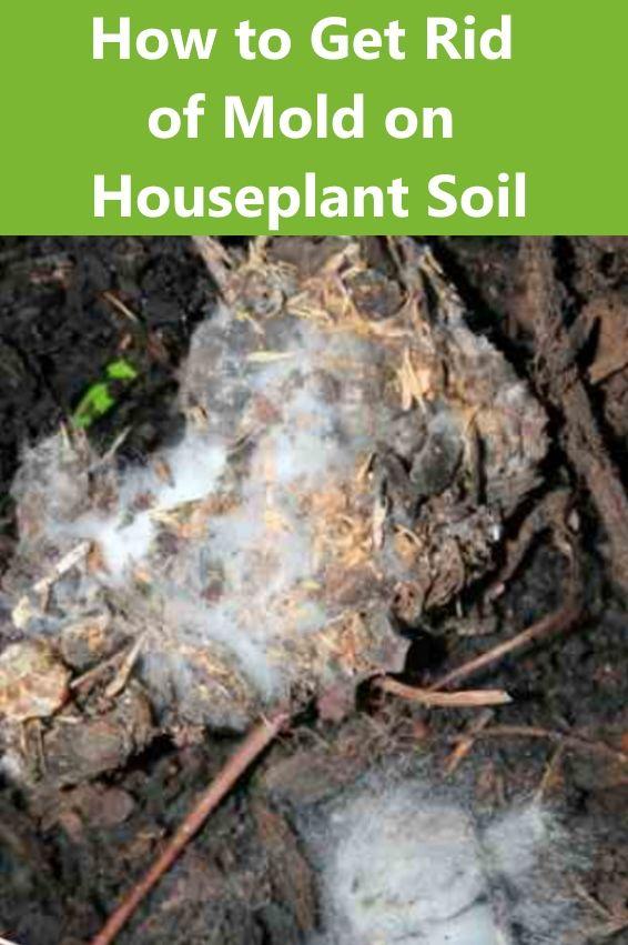 How To Get Rid Of Mold On Houseplant Soil Garden Soil Organic Gardening Soil Succulent Soil