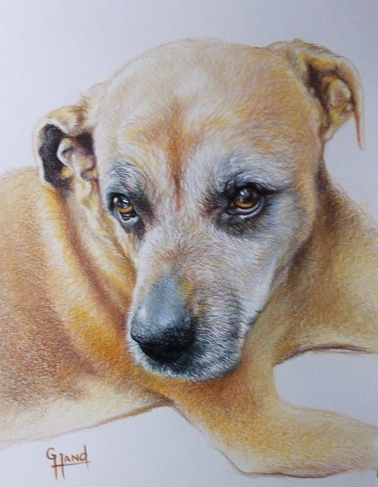 """11""""x 14""""...Pet Portrait Drawing by...Greg Hand"""