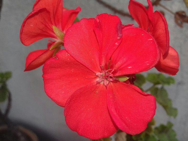 Flower ... Instagram: vero_focus