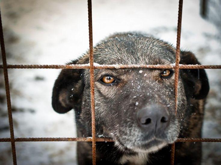 Wer sagt, dass Haustiere sich nicht wohlfühlen dürfen? Schenken Sie Ihrem Vierbeiner mehr Freiheit, indem Sie den Hundezwinger selber bauen!