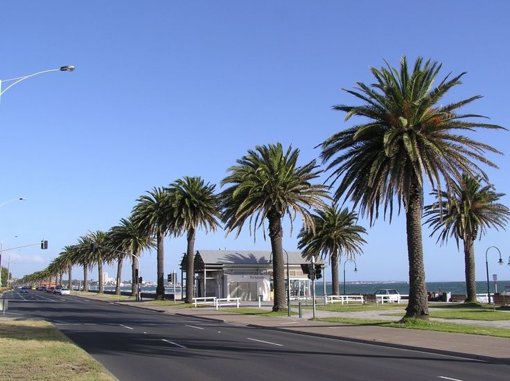 One of the first things most people notice about Albert Park is the tree-lined roads. Many of the trees in the smaller suburb of Melbourne are exotic, with trees come from both England and the Canary Islands finding their way here. The Canary Island date palm trees, for example, are very noticeable, especially along the