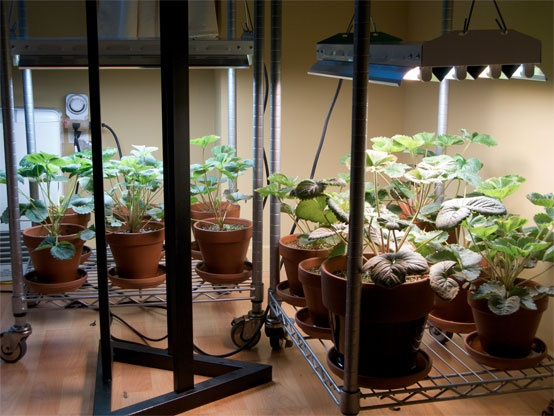 INDOOR PLANT GROW LIGHT GUIDE :: Everything you need to know about types of lights (HID, Metal Halide, HPS, fluorescent, incandescent, LED) along w/ a light output comparison chart, grow light comparison chart & info on how sunlight affects plant growth. | #plantlighting #indoorplants #lightguide #growlights #littlegreenhouse #afcgreenhouses
