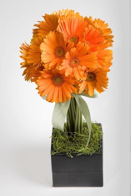 32 Best Gerber Daisy Arrangements Images On Pinterest Bellis Perennis Daisies And Daisy