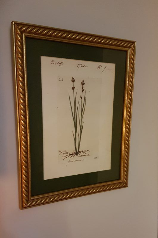 Grabados botánicos. S.XVI