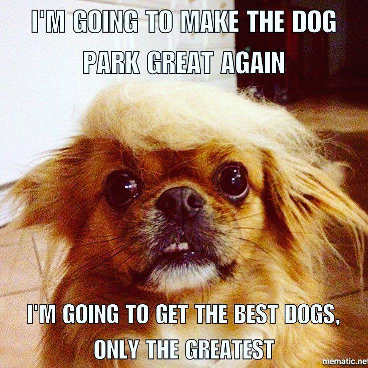 If Trump Was A Dog Www Warrenlondon Com Dogmemeoftheday Warrenlondon Dogsofinstagram Dog Dogs Nationaldogday Do Instagram Dogs Dog Groomers Dog Park
