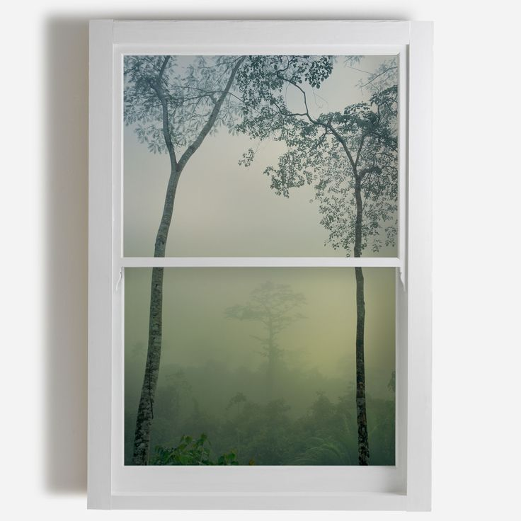 'Rainforest, Papua New Guinea' Window Film - Trunk Archive £140 | Shop Window Films & Wall Murals at surfaceview.co.uk