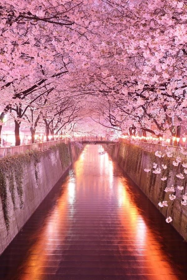 Wonderful Pink Cherry Blossom Wallpaper Iphone Beautiful Nature Beautiful Landscapes Nature