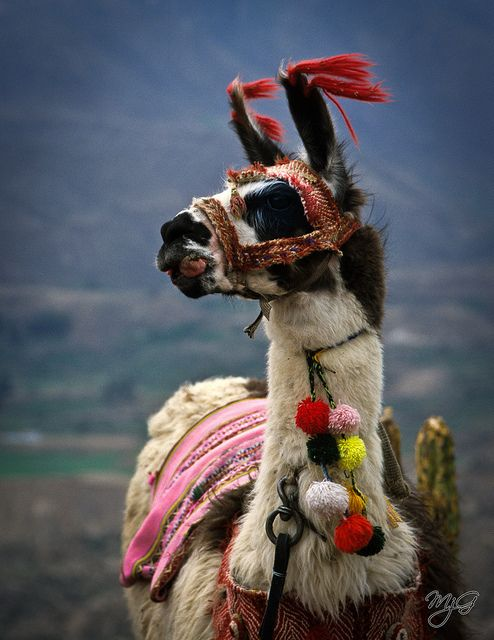 Llama with ornaments.