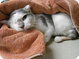 ADOPTED❤️❤️❤️❤️❤️❤️❤️❤️❤️❤️❤️❤️❤️❤️❤️❤️❤️❤️❤️❤️❤️❤️Maywood, NJ - Domestic Shorthair. Meet One Eye, a cat for adoption. http://www.adoptapet.com/pet/12401315-maywood-new-jersey-cat