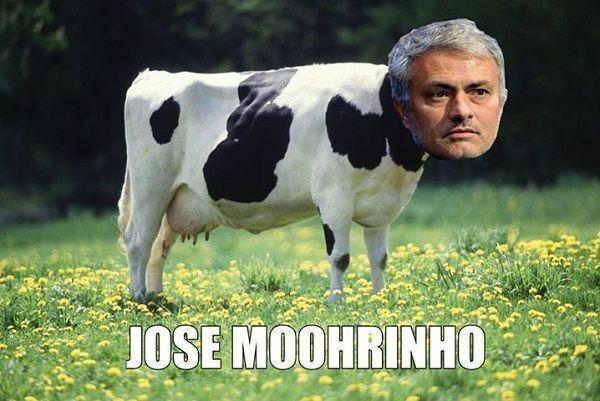 Trener Chelsea Londyn muczy jak krowa • Jose Mouuuurinho stał się mućką • Śmieszne obrazki w piłce nożnej • Wejdź i zobacz więcej >> #mourinho #memes #football #soccer #sports #pilkanozna #funny