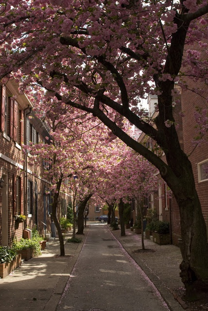 South Philly in Pennsylvania  -  1st brick houses in the city came in 1684  -  the earliest row houses came in 1691 & though those are no longer in existance, they set an example followed across the country  -  Philly has architectural walking tours