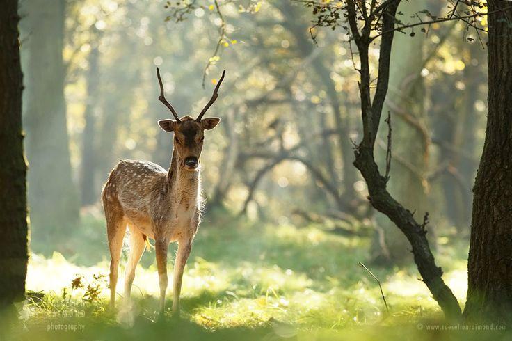 Zen Deer by thrumyeye on DeviantArt