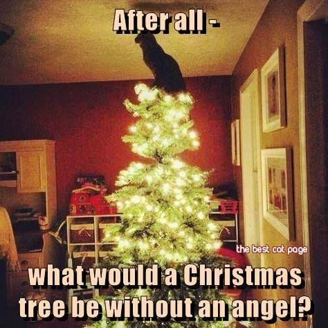 <3 -  Our feline furrbabies make purrfect Christmas Angels. ....