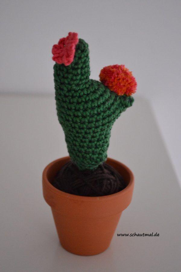 Kaktus_schautmal_de_3