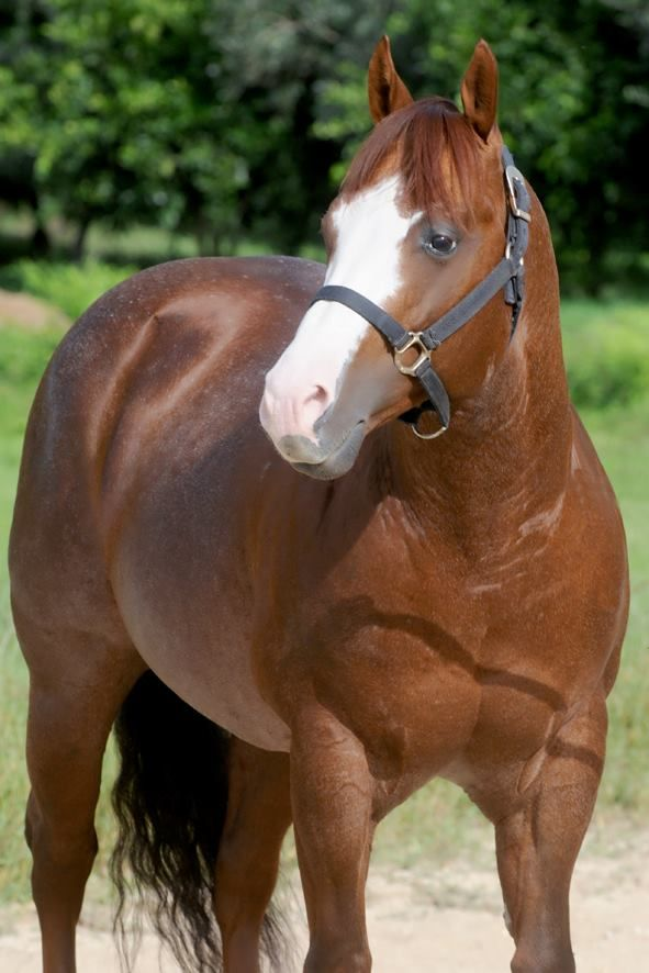 AT Ale Wood (ML Red Sol Win x ML Greatawood) 2004 Sorrel Rabicano AQHA Stallion