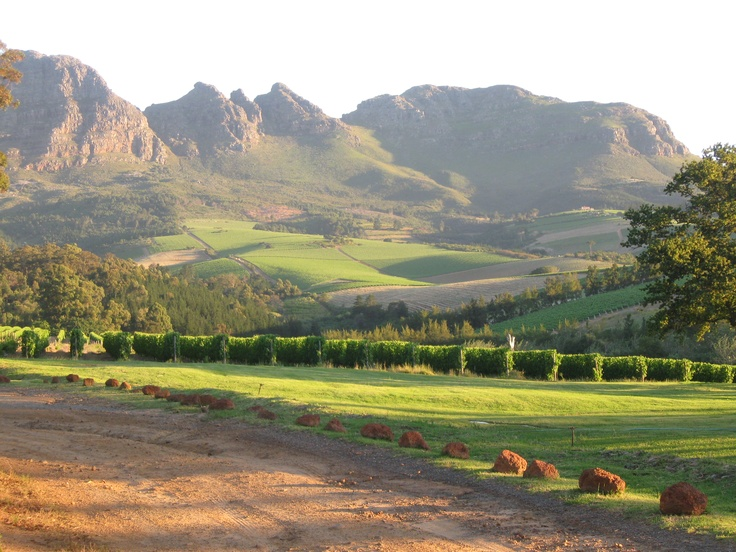 Bilton Wine Estate, Stellenbosch, South Africa