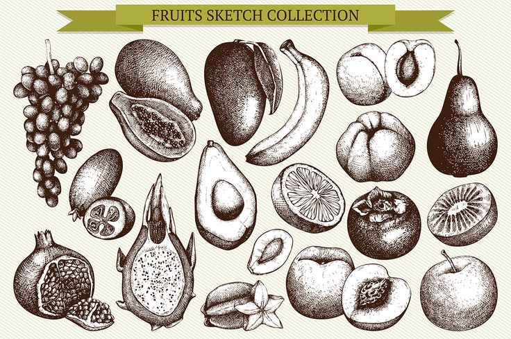 Fruit sketch collection by ievgeniia on @creativemarket