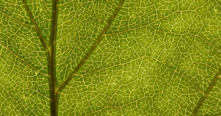 Importância da fotossíntese e da respiração. Fotossíntese e respiração celular são dois dos processos químicos mais importantes para as plantas: o primeiro armazena luz do sol como energia química, enquanto o último transforma energia em glicose para outros processos celulares.