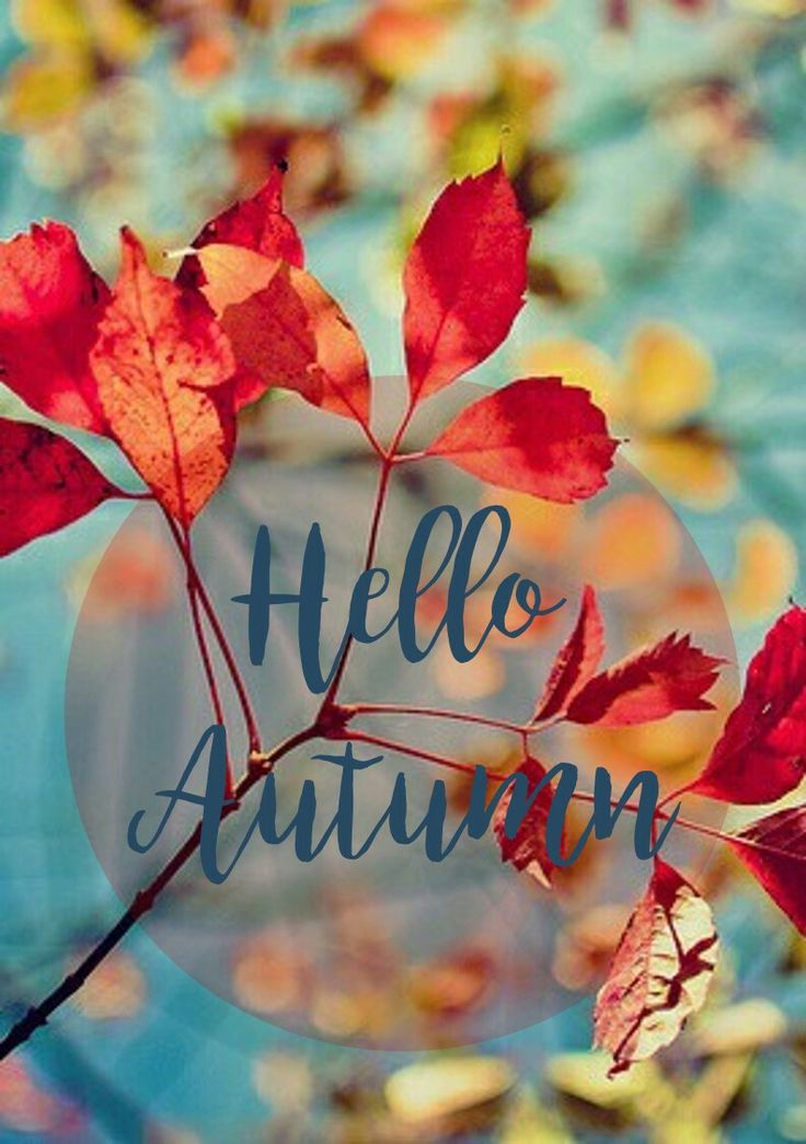 Amazing Hello Autumn, How I Love You