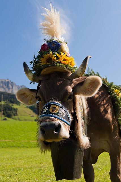 Urigen (Uri, Switzerland) by Bibi Web, via Flickr