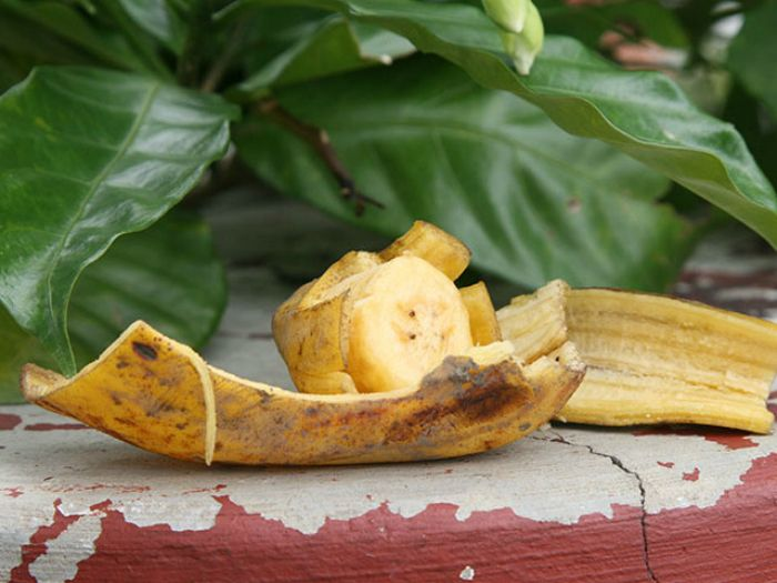 Банановая кожура для удобрения растений.