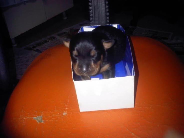 """En küçüğünüz benim. """"Hediye çeki küçüğün söz büyüğün"""", umarım yaşama bir 25TL hediye çekiyle başlarım. Siz de en yakın dostunuzun bir kutu içinde çekilmiş fotoğrafını mailto: sosyalmedya@altincicadde.com'a gönderin, 25 TL değerinde hediye çekinin sahibi olma şansını yakalayın!"""
