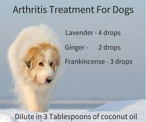 Using essential oils for arthritis treatment with your dog isn't as easy as you think. They're some oils that we should never use with animals.