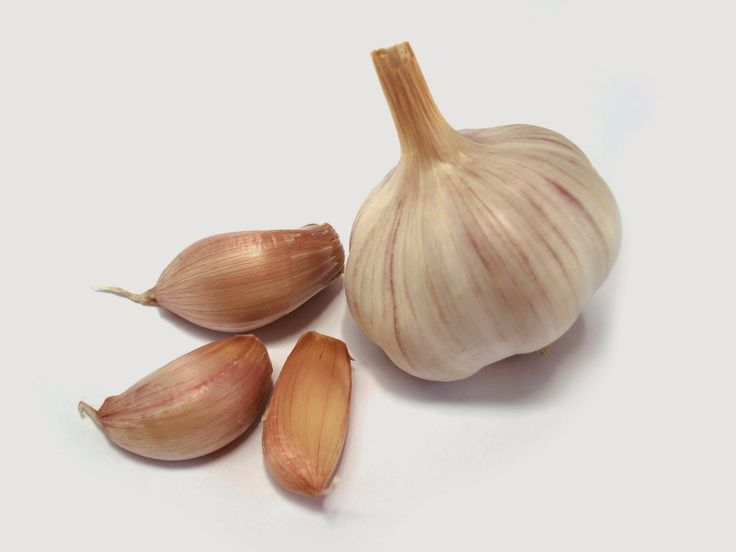 LillyPad Connections: Garlic