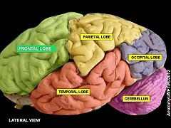 Explain the what the temporal lobe controls? HEARING