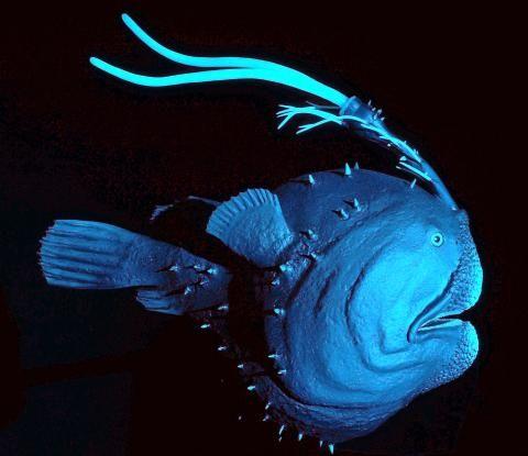 Tiefsee-Ausstellung: Bizarre Wesen aus den Tiefen der Ozeane - SPIEGEL ONLINE - Nachrichten - Wissenschaft