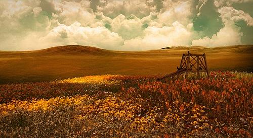 Annwn Willows - Autumn