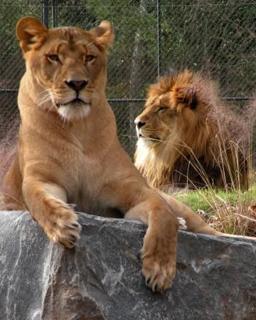 FREE  Cape May County Park & Zoo, Cape May Court House: See 1,014 reviews, articles, and 418 photos of Cape May County Park & Zoo, ranked No.1 on TripAdvisor among 8 attractions in Cape May Court House.