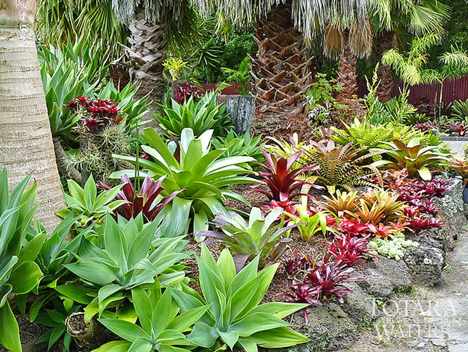 86 best Tropical Garden images on Pinterest Landscaping