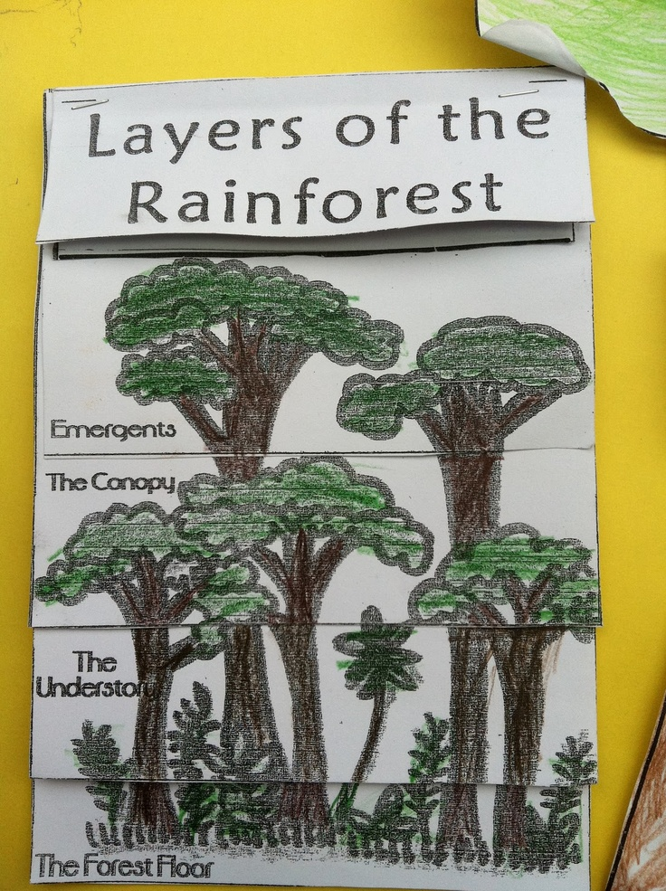 The Great Kapok Tree crafts | Little Beans: The Great Kapok Tree Lapbook Project