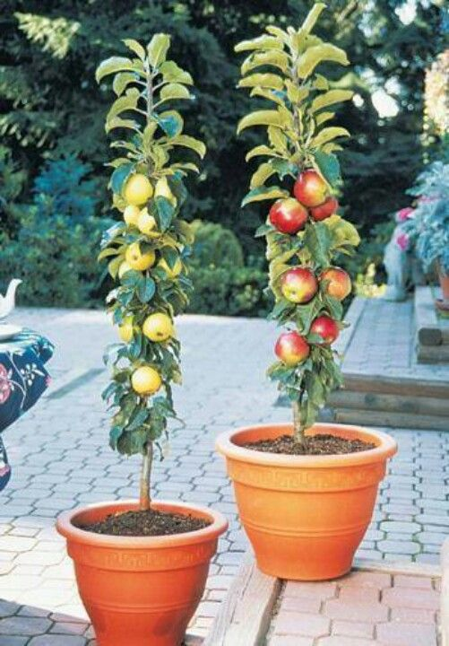 No Garden Here Are 66 Fruits Vegetables You Can Can