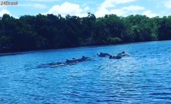 DJ flagra golfinhos em 'nado sincronizado' no canal de Maria Ortiz em Vitória