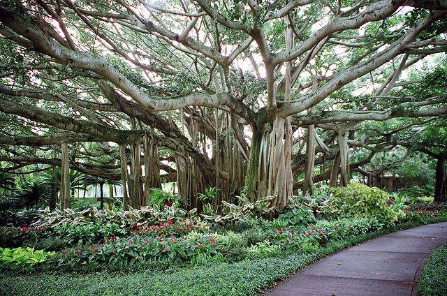 Cypress Gardens just outside Orlando, Fl