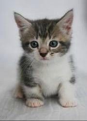 Cat Breeders - United Kingdom - #smallcat- See more stunning Tea Cup Cat Breeds at Catsincare.com!